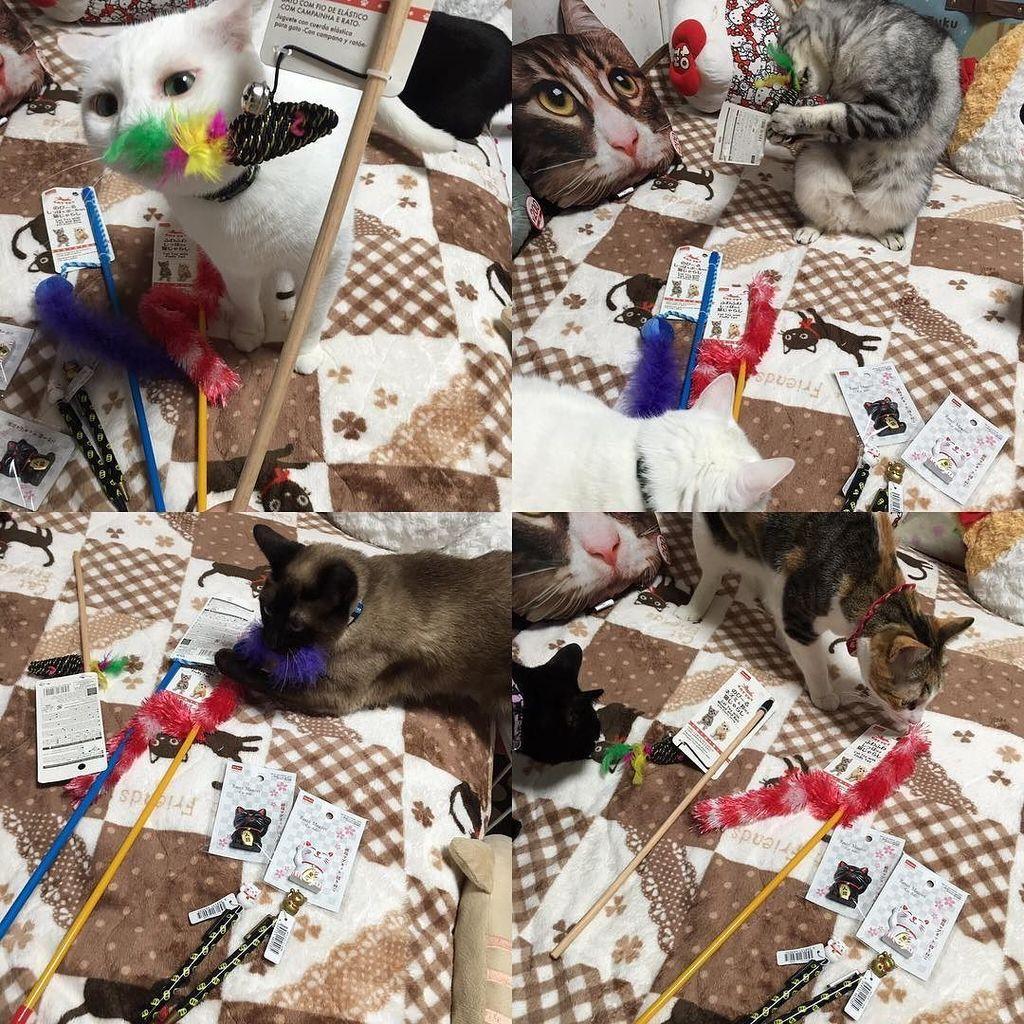 test ツイッターメディア - 開ける前にボロボロに?? なりそうな気がする(-∀-`; )?????? #猫 #ねこ #ネコ #cat #cats #catstagram #catsofinstagram #picneko #ニャンスタグラム #ダイソー #100均… https://t.co/YlbQsnIyDx https://t.co/FNAZn9BUE0