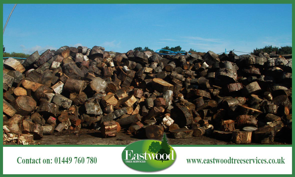 Bring your garden to life with #Eastwood Tree Services &gt;&gt;&gt;  http:// bit.ly/EastwoodTreeSe rvicesPlantHealth &nbsp; …   #TreeSurgery<br>http://pic.twitter.com/QJPaCQDpxa