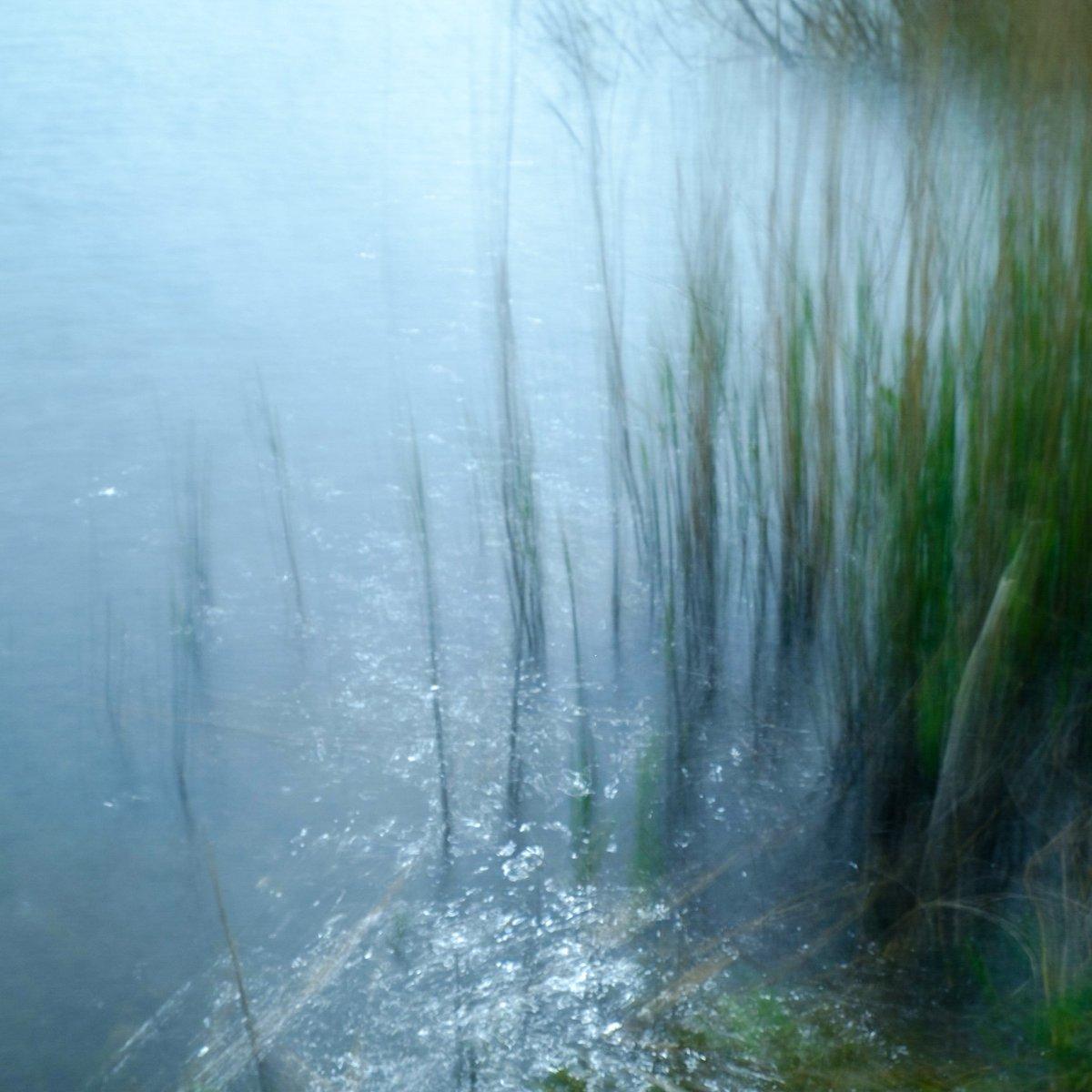 Among the reeds #calder #wetlands #ICM<br>http://pic.twitter.com/bTveqEPPXR