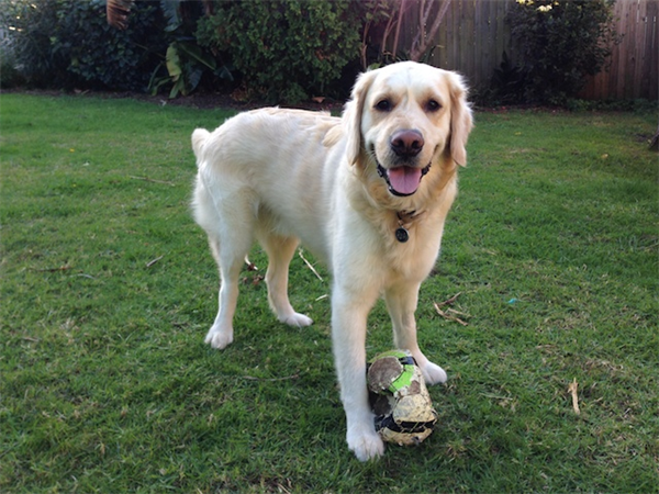 Introduction  http:// aroundmypet.com/blog/post/13/i ntroduction/ &nbsp; …  #petsitting #petshop #dogtraining #veterinary #dogwalking #doggrooming #daycare #kennel #breeder<br>http://pic.twitter.com/2Zz45TFJfQ