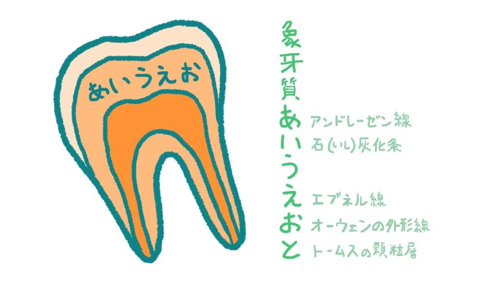 歯科衛生士のための一問一答 Twitterren 象牙質に存在する