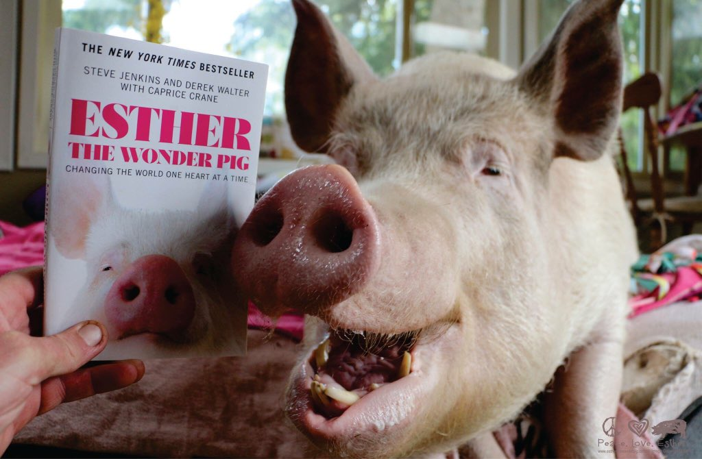 Esther Thewonder Pig On Twitter Weve Got The Perfect Book For You