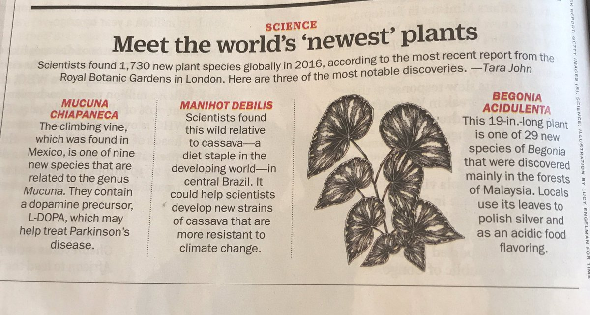 New issue of @TIME with some info re: new #plant #species! Was so happy to see this! Thanks for the reporting. #botany #scicomm #moreplants<br>http://pic.twitter.com/bDDqDzZqT9