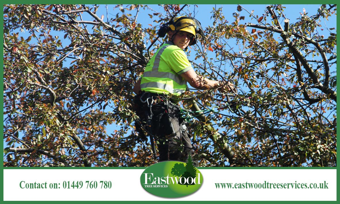 Check out these pics of our #TreeSurgeons in action &gt;&gt;  http:// bit.ly/EastwoodTreeSe rvicesGallery &nbsp; …  #Eastwood #Arborists<br>http://pic.twitter.com/Y768VaVIlA