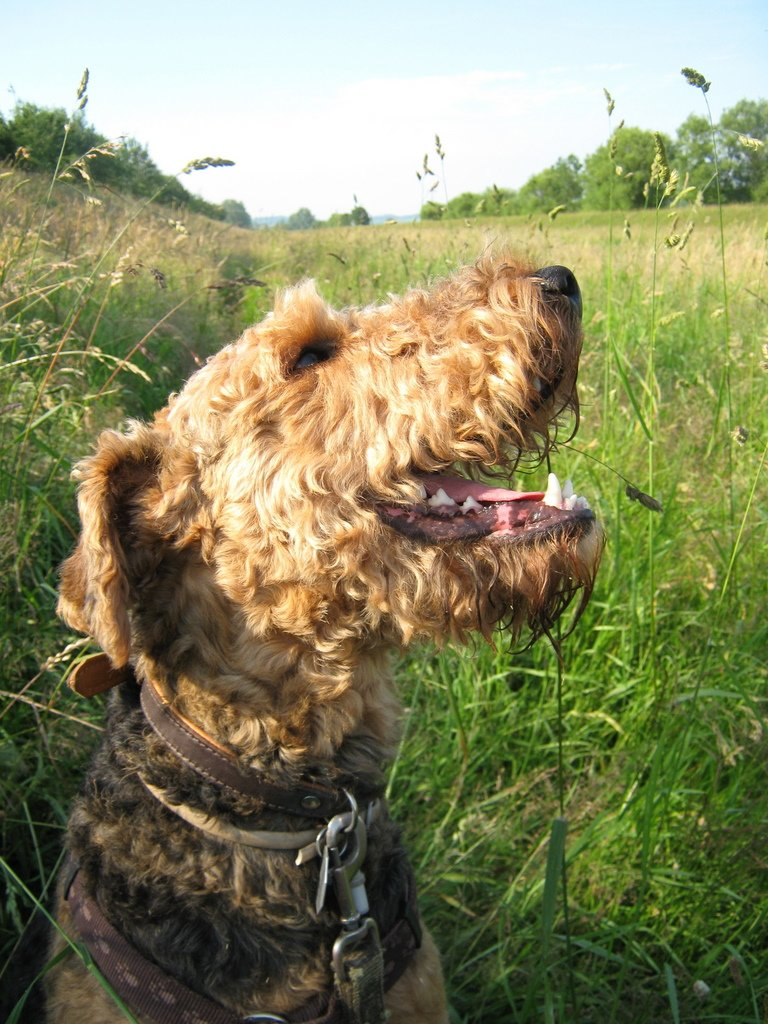 If you like this #smile, consider that #Happiness for others is just a retweet away. #dogsarejoy<br>http://pic.twitter.com/T4e1wScUhU