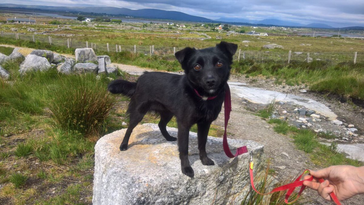 Doris posing with the stunning #mountains of #Connemara behind her-loved all the #volunteers this #weekend. Apply on madra.ie #dogrescue <br>http://pic.twitter.com/xDSRN051JT