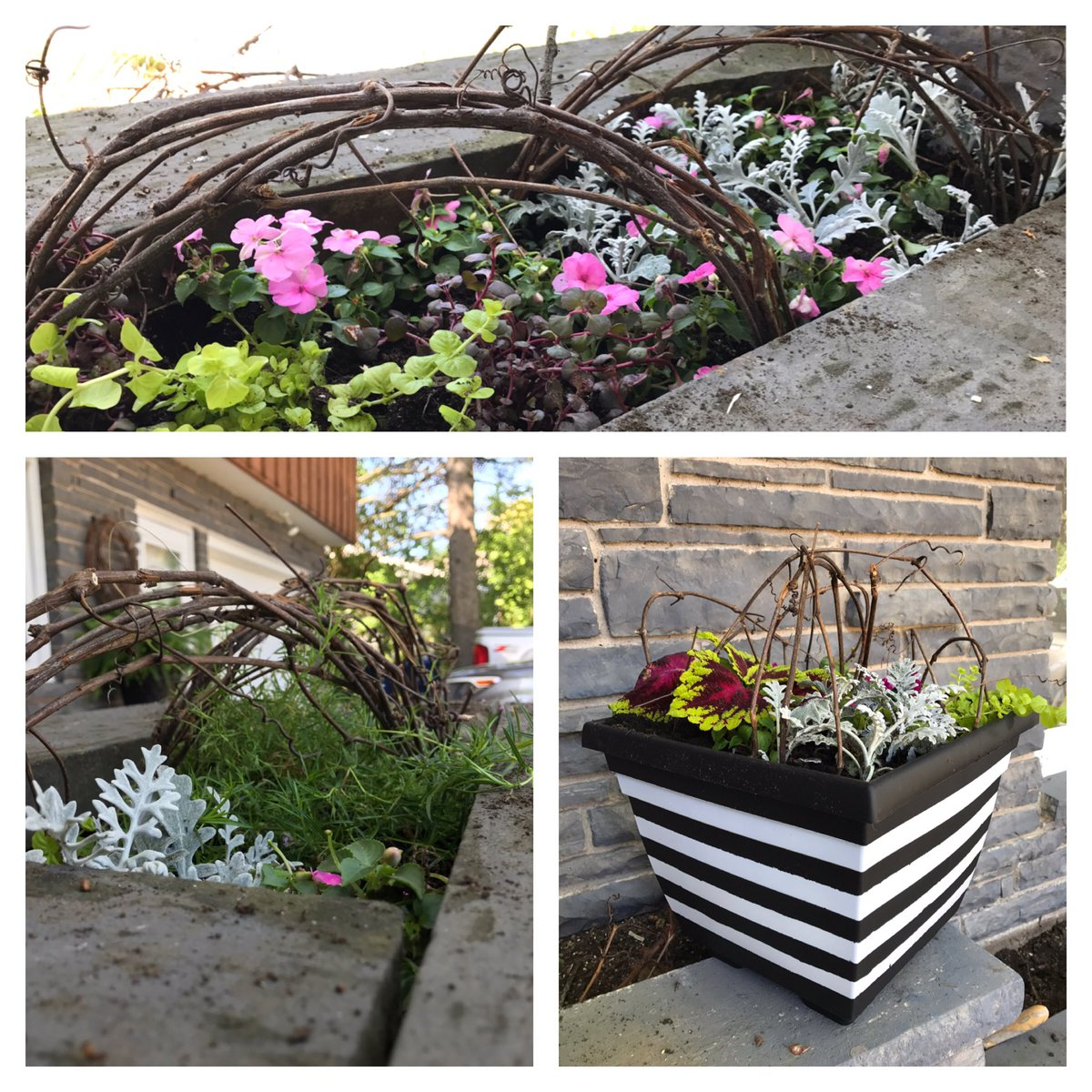 Let there be....plants!!! #greenthumb is not my gifting. I wish them luck #curbappeal #planters #blackandwhite #michellemartelinteriors<br>http://pic.twitter.com/vawEIPJc4R