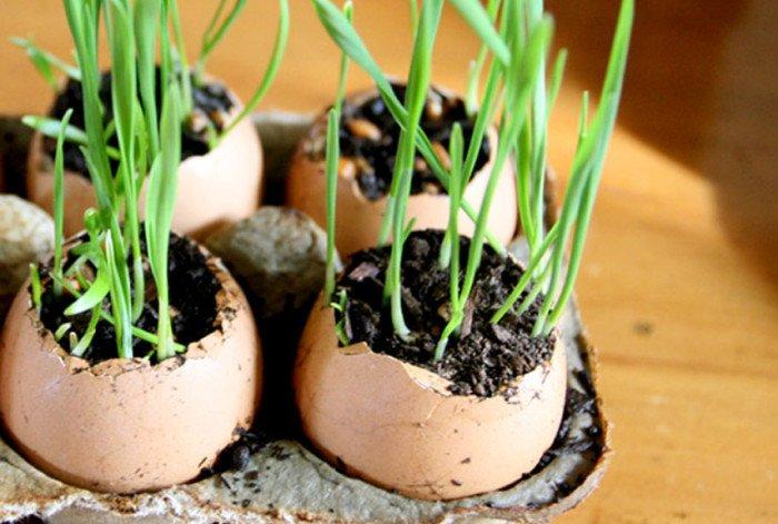 DIY Egg Shell #Planters -  http:// diy.viralcreek.com/diy-egg-shell- planters/ &nbsp; …  #EggShellPlanters #EggShells #SeedlingStarters<br>http://pic.twitter.com/YIFGejl9xk