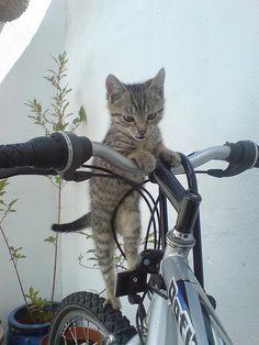 I Know I Saw Mom Do This... #CatsOfTwitter  http:// bit.ly/2bjm47s  &nbsp;  <br>http://pic.twitter.com/RICSjTQjbz