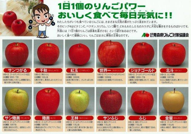 青森県民は小学生になるとこういう下敷きを学校で配られるから、りんごの品種は見た目だけでなんとなくわかる