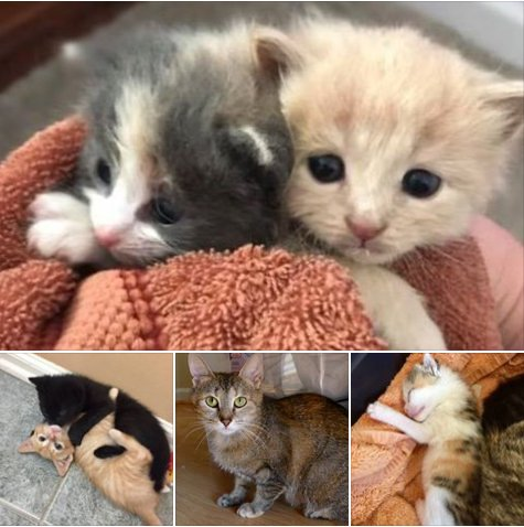 IT&#39;S #KITTEN SEASON! FOSTERS NEEDED FOR FRIENDS OF BURLCO ANIMAL SHELTER, PLEASE CONTACT US OR SHARE TO ANYONE THAT COULD HELP #FOSTER #CATS<br>http://pic.twitter.com/ZtihTW4Xh3