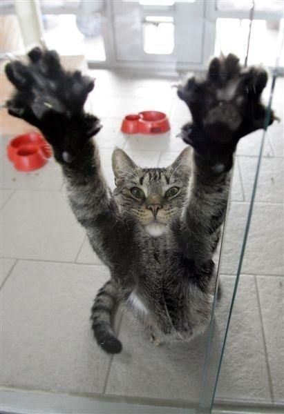 Dogs have owners, Cats have staff! ~Rita Mae Brown #catsoftwitter, #cats<br>http://pic.twitter.com/l9Kn87TR2D