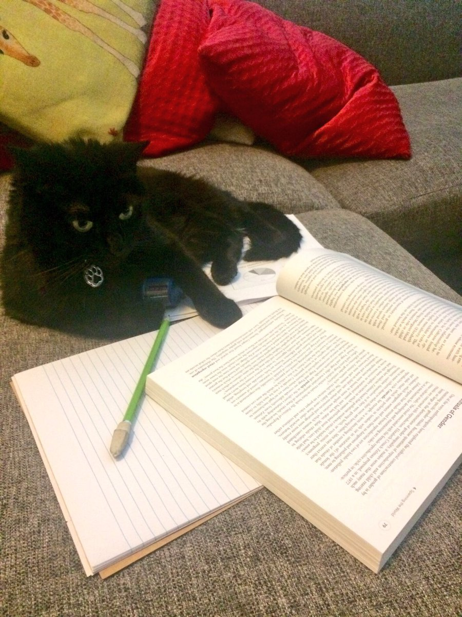 Pfeiffer does all of my studying and homework for me. She&#39;s remarkably smart, you know!! #StudentLife #CatsOfTwitter #Midterms<br>http://pic.twitter.com/FNlZHXaLgi