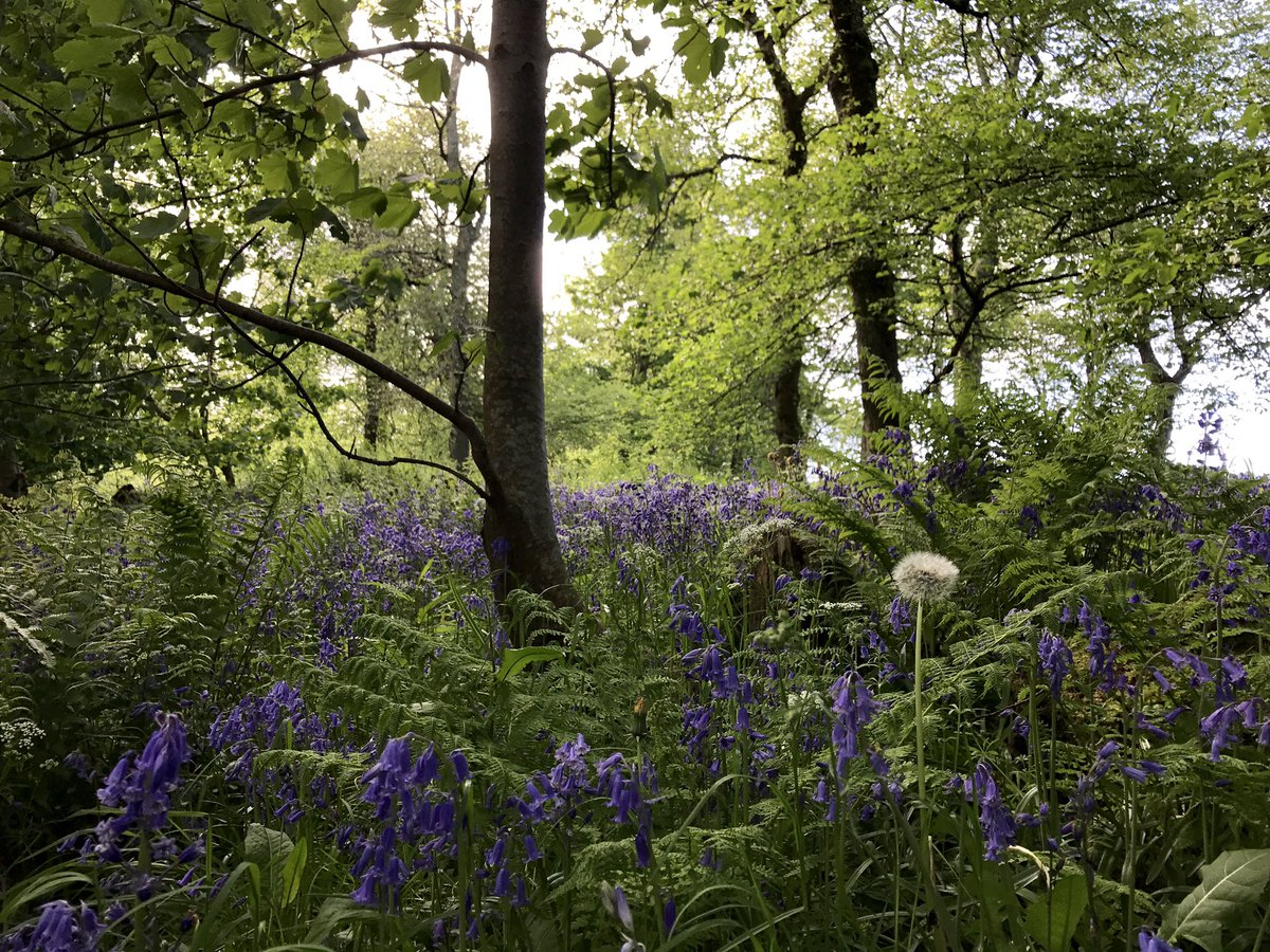 Woods o'clock... Smelling beau