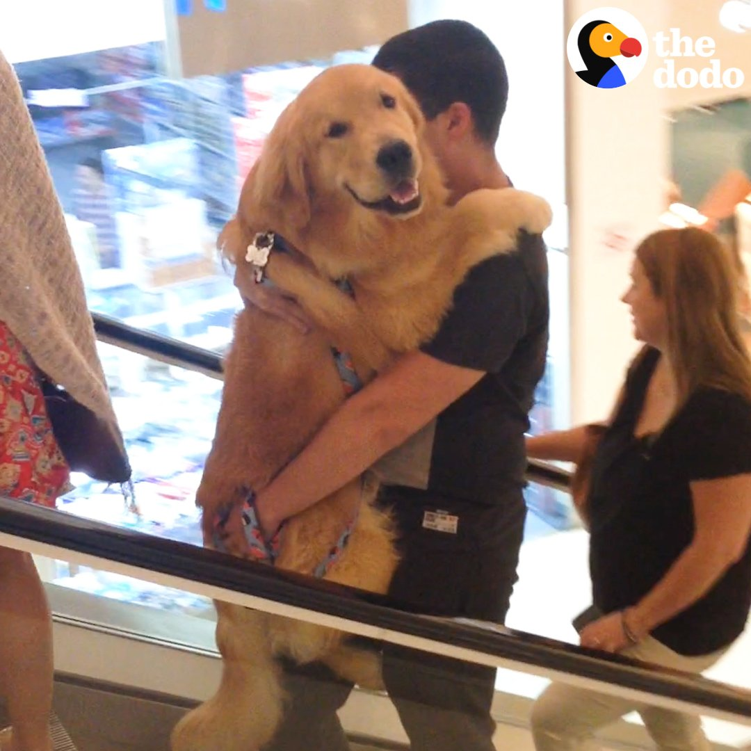 Watch this dog get carried up the escalator