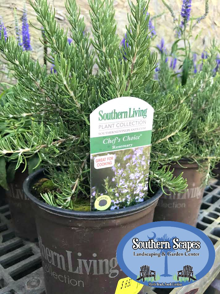 Lots Of Fun Plant Deliveries Coming In Daily! Stop By To See Whatu0027s New!  #Flowers #Plants #MyrtleBeach #GardenCenterpic.twitter.com/SLHus80TES