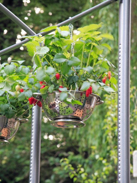 Quirky and Beautiful Hanging #Planter -  http:// garden.viralcreek.com/quirky-beautif ul-hanging-planter/ &nbsp; …  #Colander #Repurposed <br>http://pic.twitter.com/1lg0D1kyDE