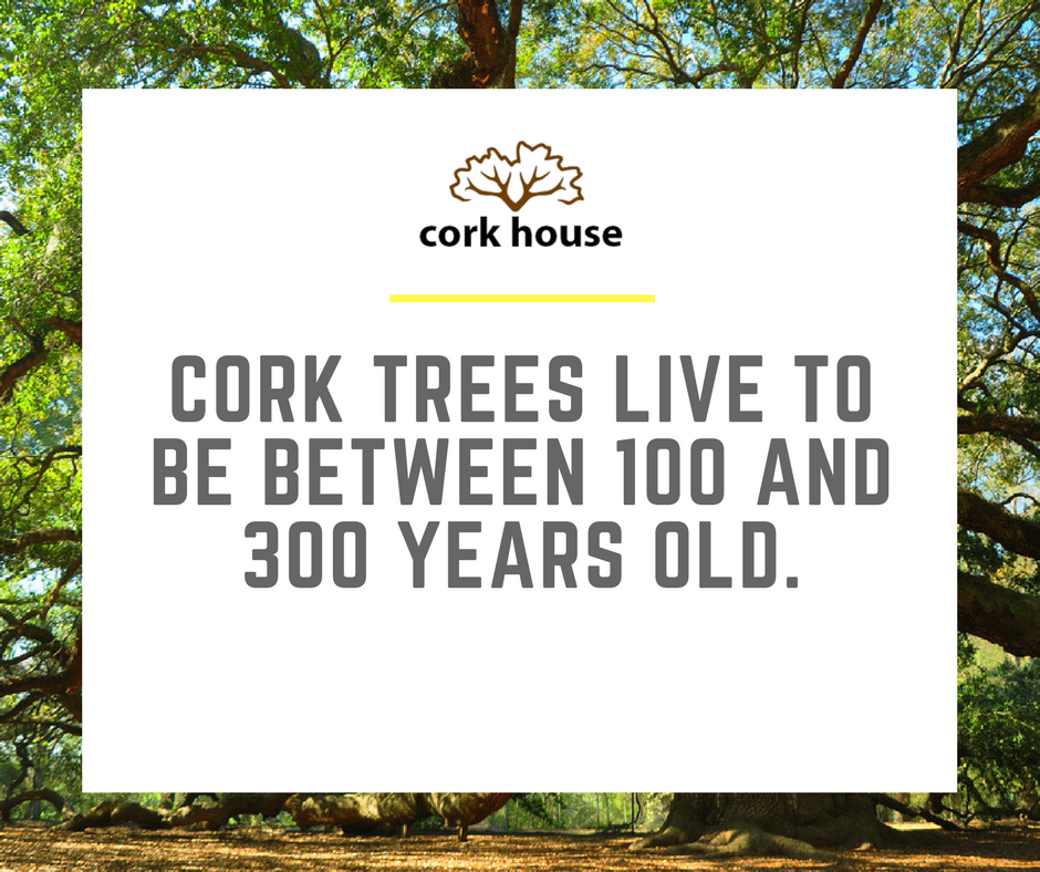 300 years of natural, sustainable, and reusable material. #TheCorkHouse #Cork #Sustainable #Reusable #EcoFriendly #CorkFacts #GoGreen<br>http://pic.twitter.com/SDptfOzhfq