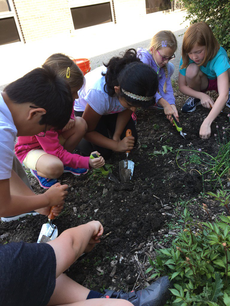 Trowels get a workout in our concrete-soil. But smell our lavender plants now! #iginspires #greengardenclub https://t.co/l6oWpyoYYD