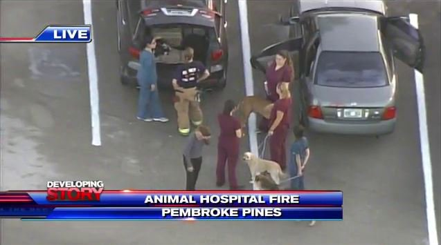 Fire breaks out at Pembroke Pines animal hospital; no injuries reported