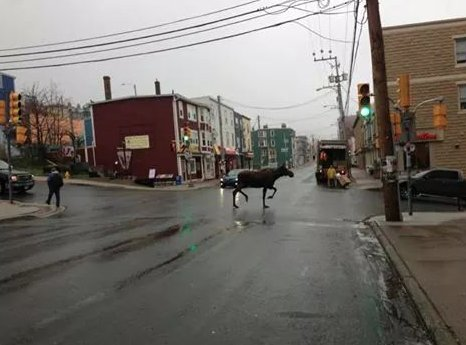 Now, another St. John's traffic report: https://t.co/TkBHVOVoNC