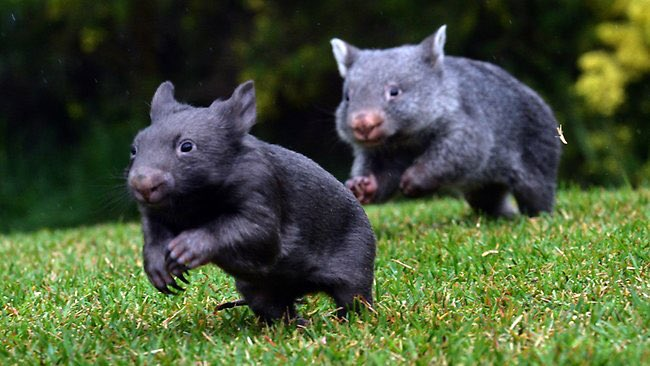 Quick hurry up... Were going to miss &quot;The Living Room&quot;.  #TheLivingRoom #Wombat #RunningLate #ChrisBrown @livingroomtv<br>http://pic.twitter.com/XA8UEWdSfb
