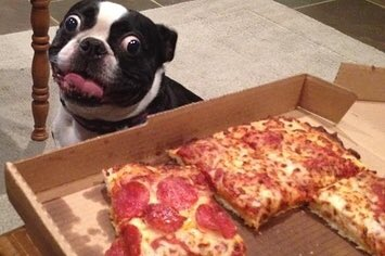 Woof don&#39;t need a national holiday to find an excuse to eat pizza. But since you mentioned it...  Happy #NationalPizzaPartyDay <br>http://pic.twitter.com/X46XJnCf4y