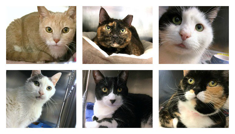 #MakeAGoodMorningGREAT today, Philly - adopt a cat! We are completely FULL of cats&amp;kittens who need loving homes; stop by &amp; fall in love!  <br>http://pic.twitter.com/tge952ALv4