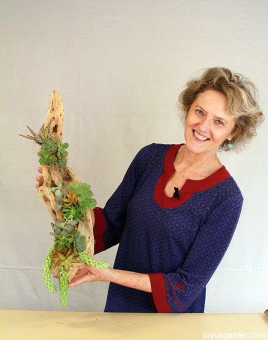 2 Succulent & Driftwood Arrangements; 1 Tabletop, 1 Hanging -
