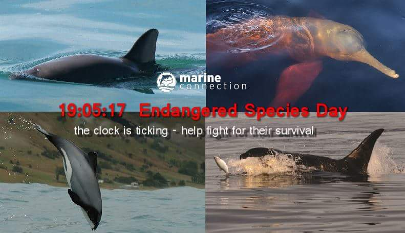 #EndangeredSpeciesDay Latest News Trends Updates Images - TacomaBliss