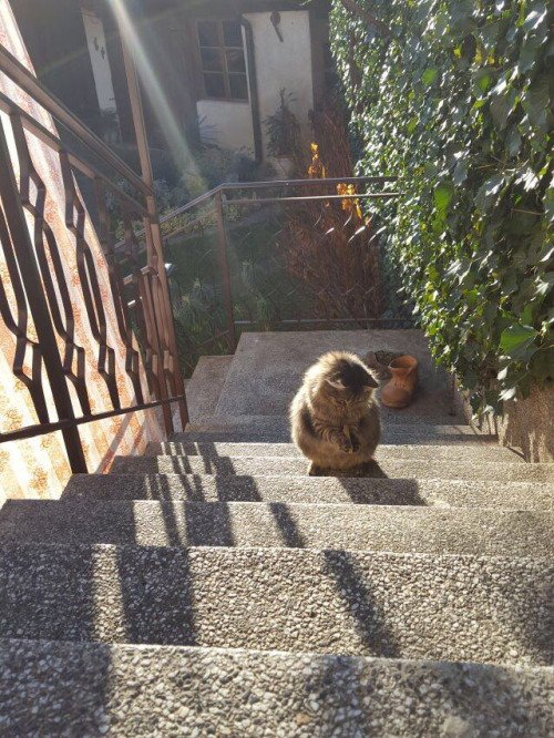 何か(洗濯ばさみ)拾って暫し考えたが、猫の私には解決策が見出せない。