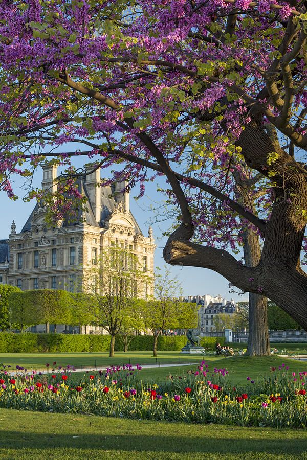 Spring time in París. Tulleries garden with Louvre Museum beyond. By....