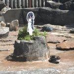 恋するペンギンとして一躍有名になったグレープくん!辛すぎる過去と現実を背負っていたことが判明!
