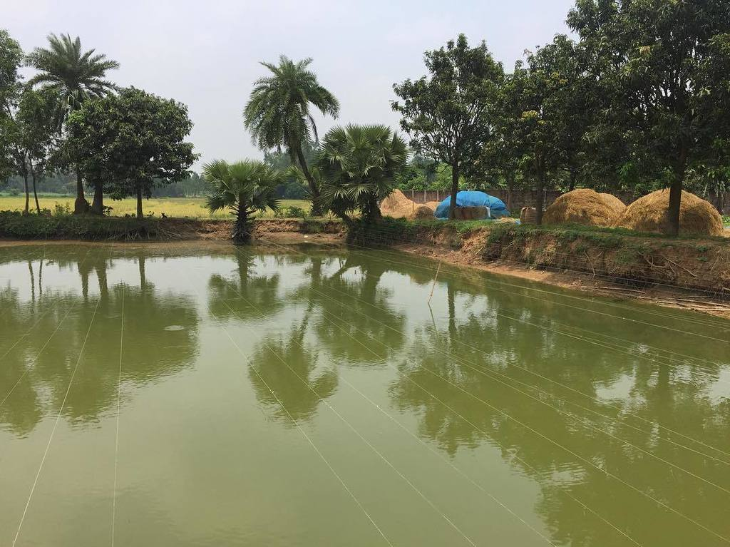 test Twitter Media - Fiber Net Technology! No Fishing! 🚫🎣 #VillageTech #fishing #village #Pond #Bangladesh #Rajshahi #Naogoan #deshi https://t.co/4X518bbEdp https://t.co/Gw295uLkO5