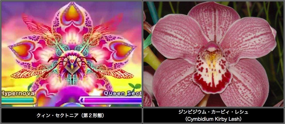 【植物ネタ】この洋蘭、なんだかクィン・セクトニアを彷彿とさせるなあと思っていたら、なんと名前がカービ…