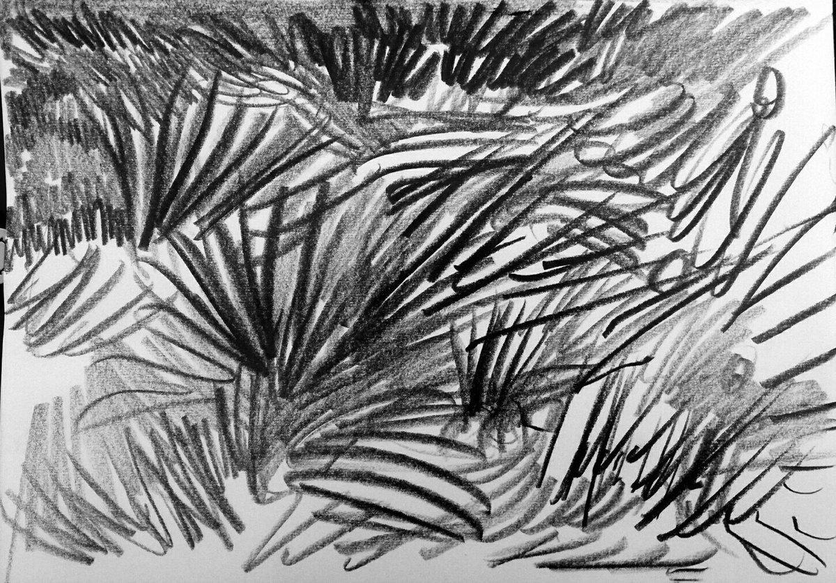 Grass in the afternoon #pencil #drawing<br>http://pic.twitter.com/2DKhlGcdL6