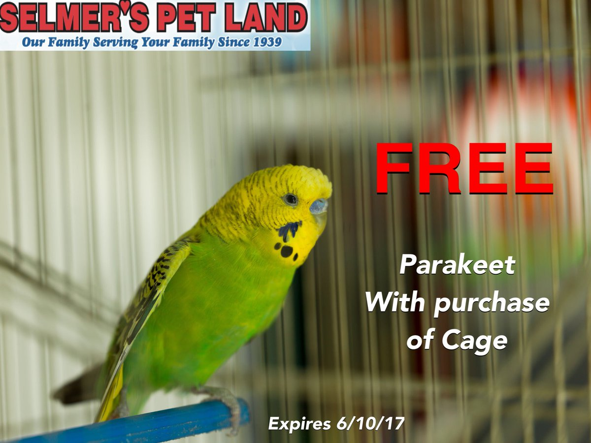 FREE parakeet with the purchase of a cage!! #SelmersPetLand #Selmers #petshop #petstore #huntington #huntingtonNY #petsupplies #parakeet<br>http://pic.twitter.com/qKKZRy39Kh