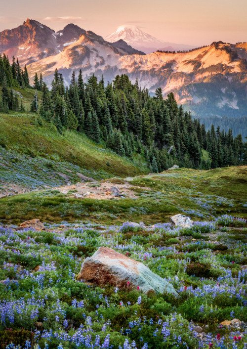 One of the most beautiful places on Earth: @MountRainierNPS  by Rip Ri...