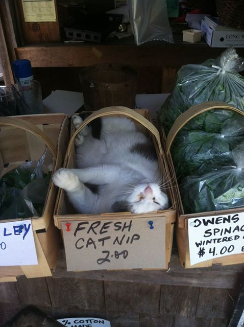 Meanwhile, at the local farmer's market..... https://t.co/i9V4SuJmHN