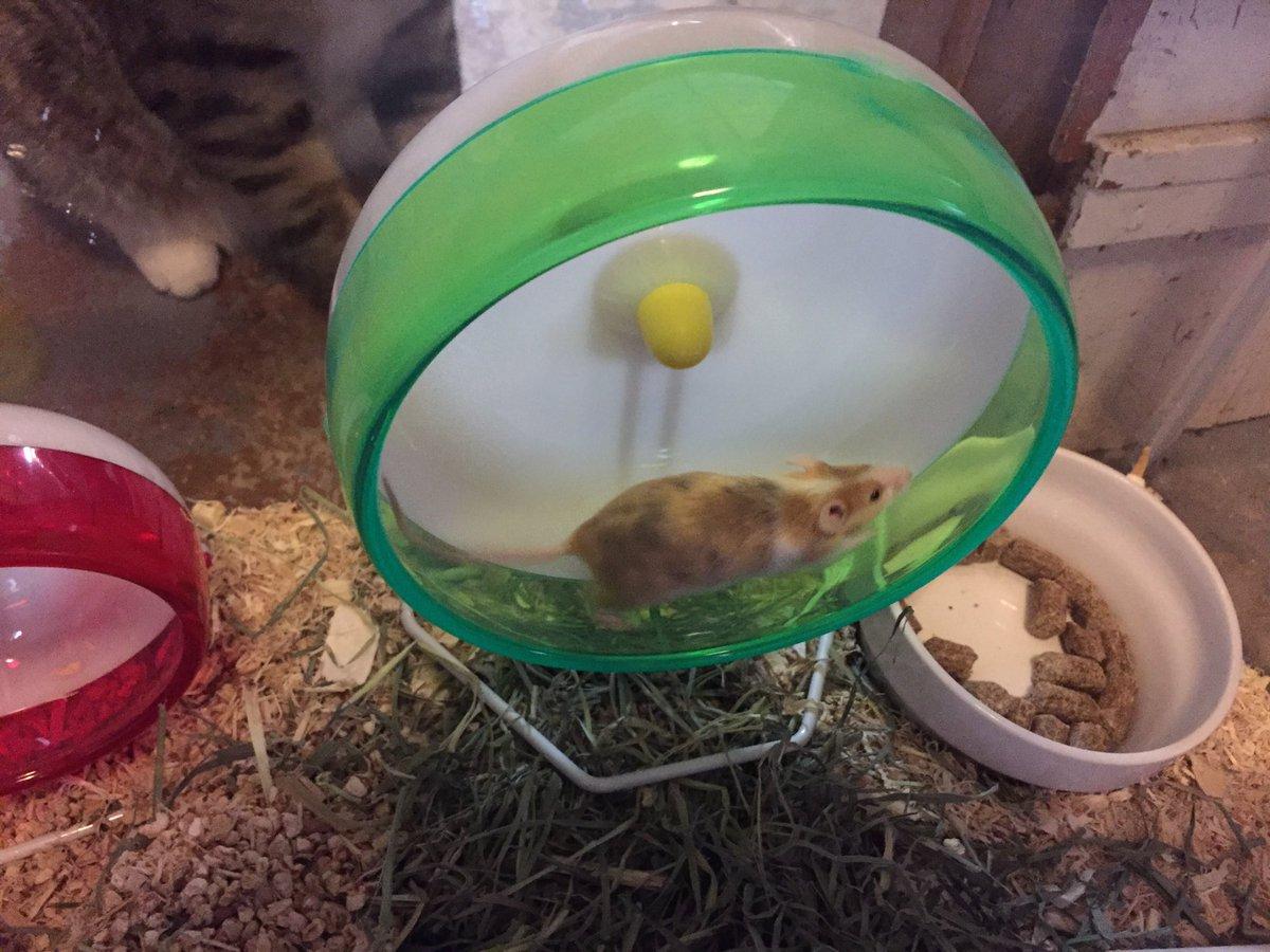 my new mice + variety identification? DASiK15WAAAewVW