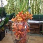 Loving these elaborate centerpieces for @ICSC @ICSC_RECon @ExpoEase #flowers #centerpieces #Convention