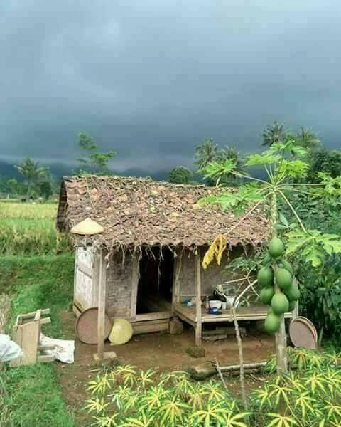 @mrhumbel @janishalls @langata145 @mrhumbel @janishalls @arlenesg @Patimoa56 @larioscar  @Princess43000 Simple n #HealthyLiving in #Village <br>http://pic.twitter.com/cU9TrAnhkh