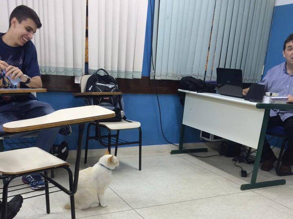 Gato 'estudante' acumula títulos de melhor aluno em faculdade de SP https://t.co/UQZy8qsoDO #G1
