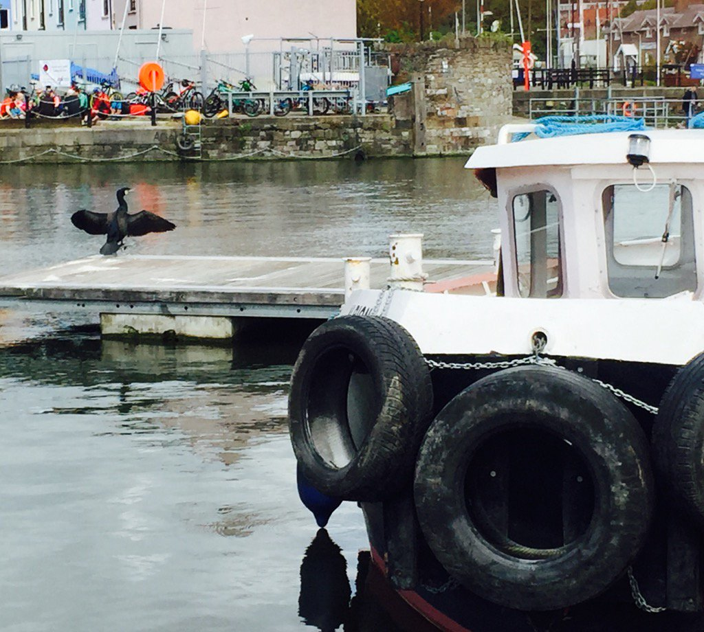 Cormorant drying its wings this morning#BristolHarbour x just lovely down there today https://t.co/9MgrmRejk7