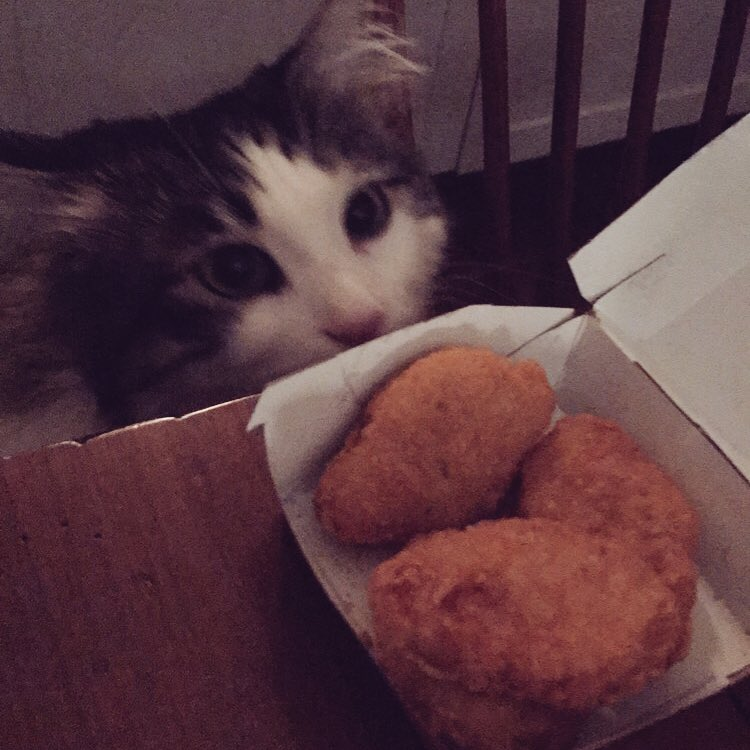 When mom gets late night nuggets, I try to get in on that...#Caturday #CatsOfTwitter #latergram <br>http://pic.twitter.com/3ecV71Eqp8