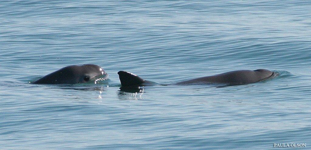 #EndangeredSpeciesDay Latest News Trends Updates Images - Gizmodo