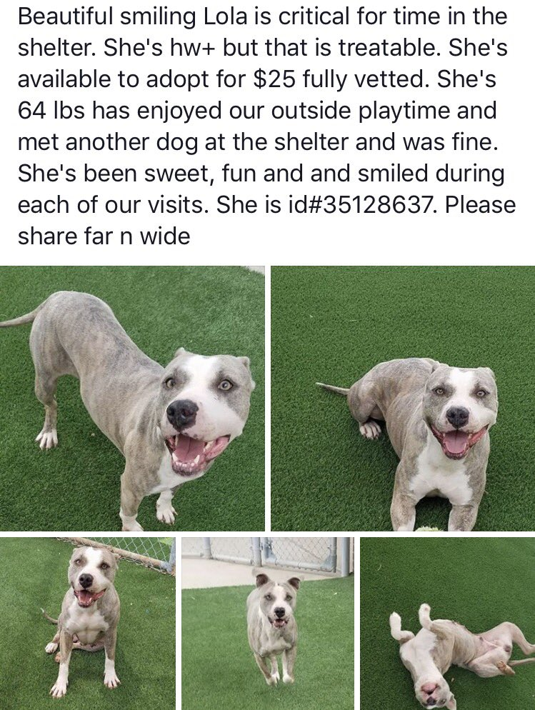 This wonderful #dog is #URGENT #Arlington #Texas &amp; needs a #family #AdoptDontShop via @PAASofAAS #RetweeetPlease #dogsarelove #share #TX<br>http://pic.twitter.com/hXO4EmpA7R