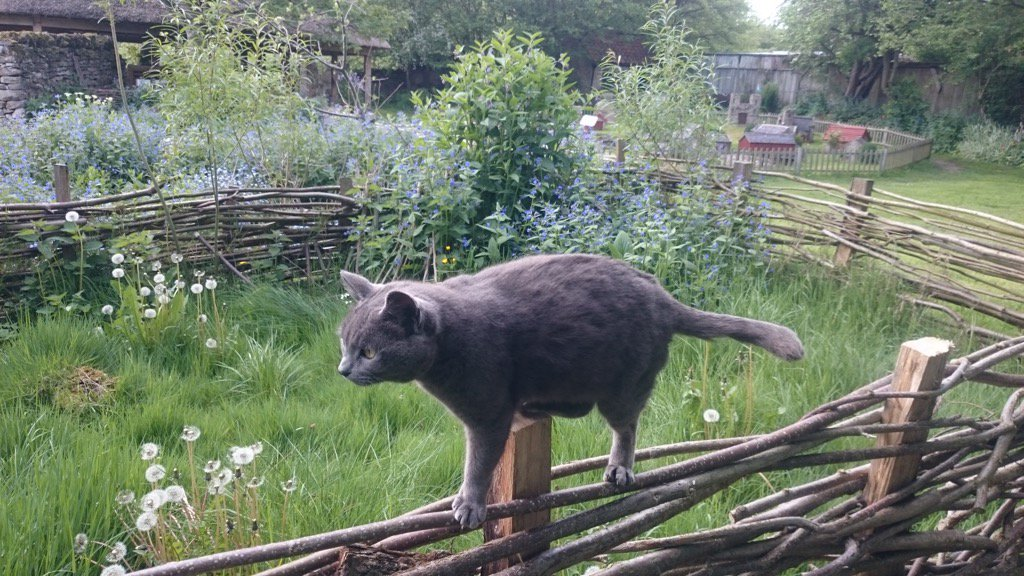 Amongst our plethora of fab exhibits we also have a \'hurdle walking #museum cat\' Doesn\'t every museum have one?