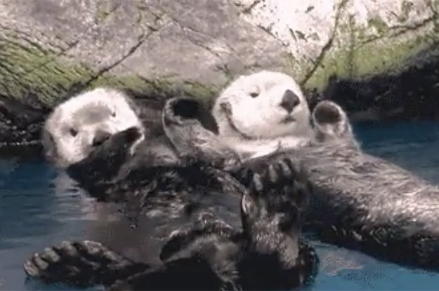 Here\'s a bunch of otters holding hands for your friend who\'s having a bad day