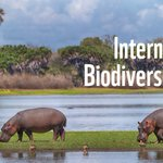 Celebrate all the amazing natural places and species on our one planet this #InternationalBiodiversityDay! https://t.co/k1NSSXmcRW #IBD2017